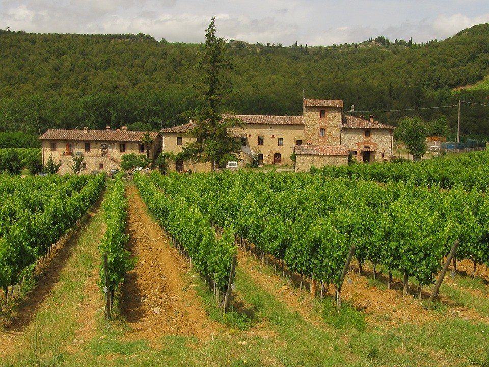 The picturesque vineyards of Tuscany. Some of which haven't changed much in centuries!